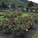 ภาพถ่ายของ Lady Norwood Rose Garden