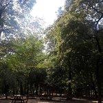 Foto de Belgrad Forest