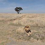 plains of Serengeti