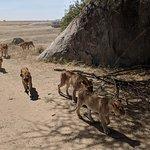 A Pride in Serengeti