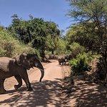 Elephants of Lake Manyara