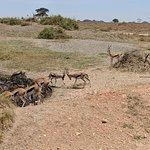 Giselle's of Serengeti
