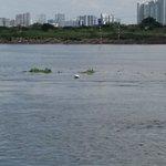 Søppel som flyter på Saigon river. Dette er ikke bra. Vil vietnameserne  ha det slik? Hvem gjør noe?