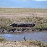 Foto de Tanzania-Experience
