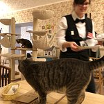 Cat Cafe Kačių Kavinėの写真