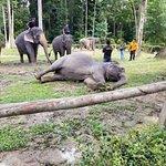 صورة فوتوغرافية لـ Kuala Gandah Elephant Sanctuary