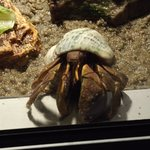 Awesome hermit crab