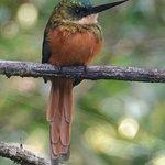 Φωτογραφία: Peter Cox Wildlife Tours