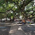 Banyan Tree Park fényképe