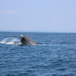 Whale watching tour privet speed boat tour