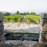 The landscape of Provence, rolling hillsides, vineyards - Château La Coste