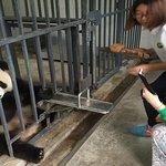 Panda Volunteering.