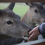 Fun, interactive deer feeding session.