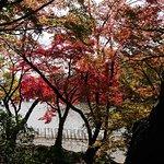 四季折々の庭園を眺めながら、お抹茶と季節の和菓子(300円)を頂くことができます。平日の昼間に訪れましたが空いていたのでゆっくり寛ぐ事ができました。北駐車場(30台)からすぐの場所にあります。紅葉が綺麗でした。
