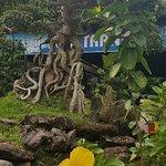 Tranh Stream Foto