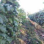 Tunnel Winery Khareba'sの写真