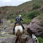 Horseback riding with the dogs!