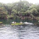 Photo of Cenote Jardin del Eden