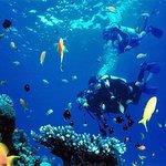 Snorkeling Trip At Port Ghalib Marina from Marsa Alam