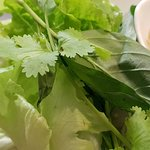 Lechuga, cilantro y albahaca