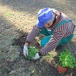 Planting spices for our cuisine