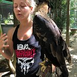 Interaction with raptors