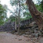 bigger trees growing through ruins than Ta Prohm