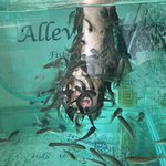 Alleviate Fish Spa Foto