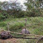 Bild från Nairobi Mamba Village