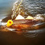Beautiful #redfish