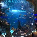 Bild från Aquarium Restaurant