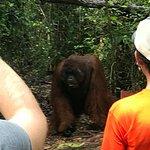 Orangutan Houseboat Tour Foto