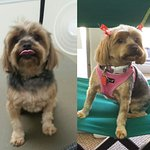Before and after grooming