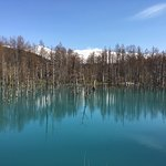 Blue bond at Biei in April