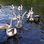 Territory Wildlife Park Photo