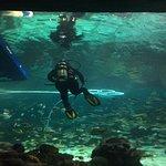 Best Aquarium In America