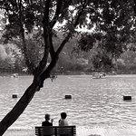 Shenzhen Lianhuashan Park resmi