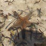 Ảnh về Nakupenda Beach