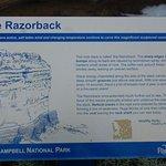 Фотография The Razorback
