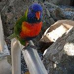 Coral World Ocean Park Foto