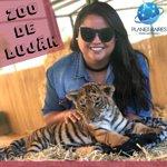 Tenga contacto con animales en el Zoo, experiencia única!