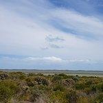 Coorong National Park照片