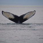 Foto van Cross Sound Express Whale Watching
