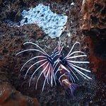 Bilde fra Lembongan Snorkeling Trips
