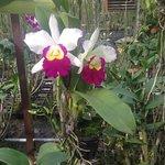 Zdjęcie Phuket Orchid Farm