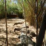 Photo of Crocodile Ranch