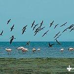 National reserve Paracas