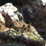 SeaLions in Ballestas Islands