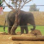 Forlorn elephant
