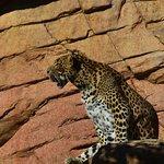 Photo de Bioparc Fuengirola